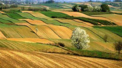 tarım alanları talan ediliyor