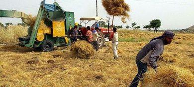 kapitalizm tarımımız temel demirer